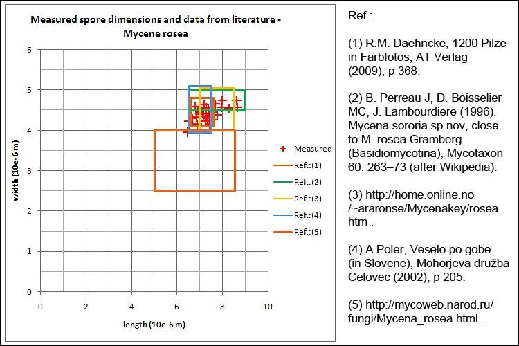 Mushroom Observer: Observation 84143: Mycena rosea ( Bull. ) Gramberg
