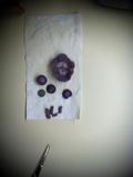 Clitocybe tarda image