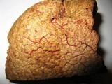 Suillus ochraceoroseus image