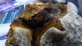 Ganoderma resinaceum image