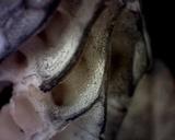 Morchella punctipes image