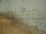 Hemimycena cucullata image