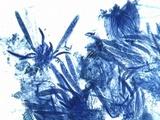 Coccomyces dentatus image