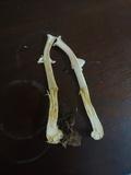 Agaricus rufoaurantiacus image