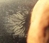Lactarius subserifluus image