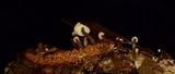 Marasmiellus praeacutus image