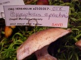 Hygrophorus capreolarius image