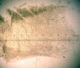 Hygrocybe angustifolia image