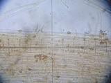 Galerina triscopa image
