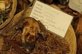 Cortinarius malachius image