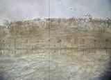 Pluteus romellii image