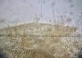 Hebeloma hiemale image
