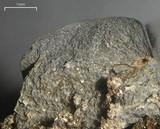 Leptogium arsenei image