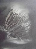 Megacollybia rodmani image
