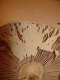 Amanita pelioma image