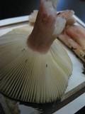 Russula queletii image