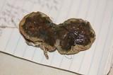Protubera maracuja image