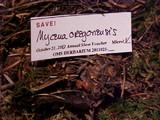 Mycena oregonensis image
