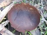 Lycoperdon utriforme image
