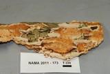 Steccherinum ochraceum image