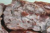 Phlebia subochracea image