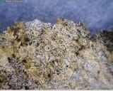 Hymenoscyphus imberbis image