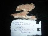 Corticium meridioroseum image