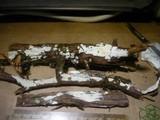 Hyphodontia juniperi image