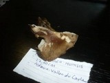 Melanoleuca humilis image