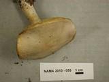 Floccularia pitkinensis image