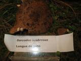 Sarcodon scabrosus image