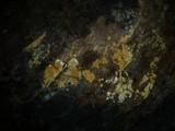 Botryobasidium aureum image