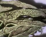Ramalina subleptocarpha image