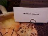 Russula bicolor image