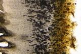 Gymnopilus echinulisporus image