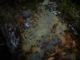 Cerocorticium sulfureoisabellinum image