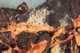 Phanerochaete sanguinea image