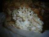 Pleurotus citrinopileatus image
