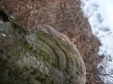 Ganoderma pfeifferi image