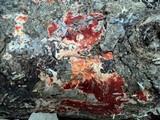 Ceriporia spissa image