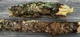 Trichaptum laricinum image
