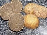 Rhizopogon luteolus image