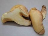 Suillus kaibabensis image
