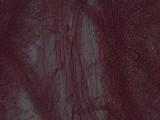 Mycena rosea image