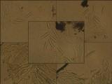 Graphis scripta image