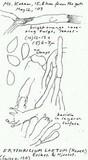 Erythricium laetum image
