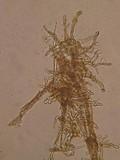 Xeromphalina cauticinalis image