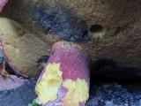 Boletus bicolor var. subreticulatus image