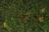 Clavulinopsis corniculata image