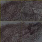 Inocybe bongardii image